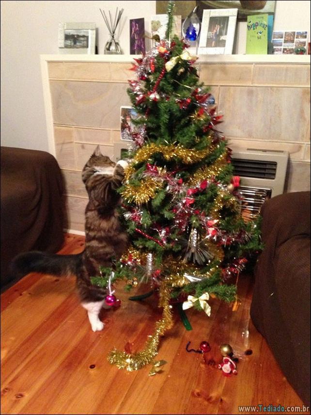 gatos-ajudando-a-decorar-arvore-de-natal-10