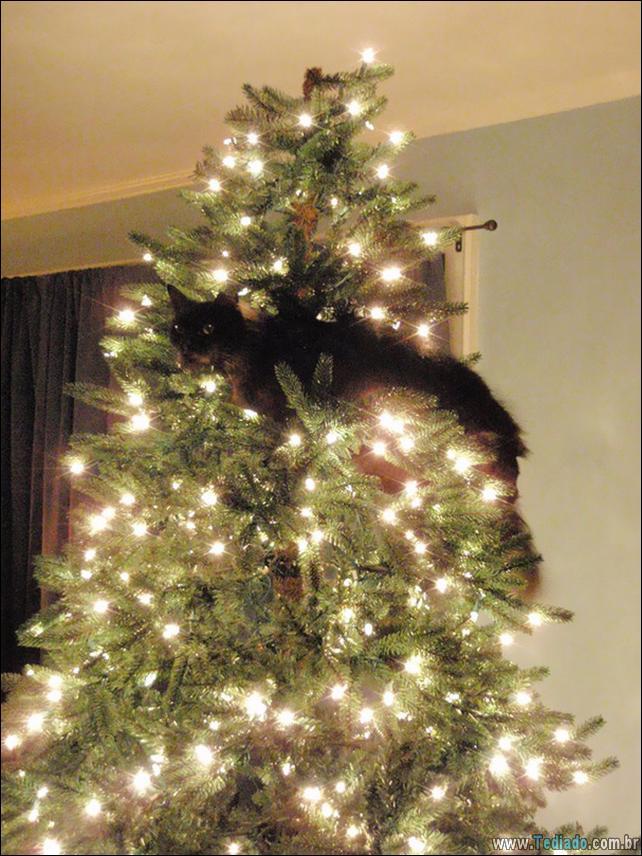 gatos-ajudando-a-decorar-arvore-de-natal-11