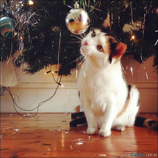 gatos-ajudando-a-decorar-arvore-de-natal-12