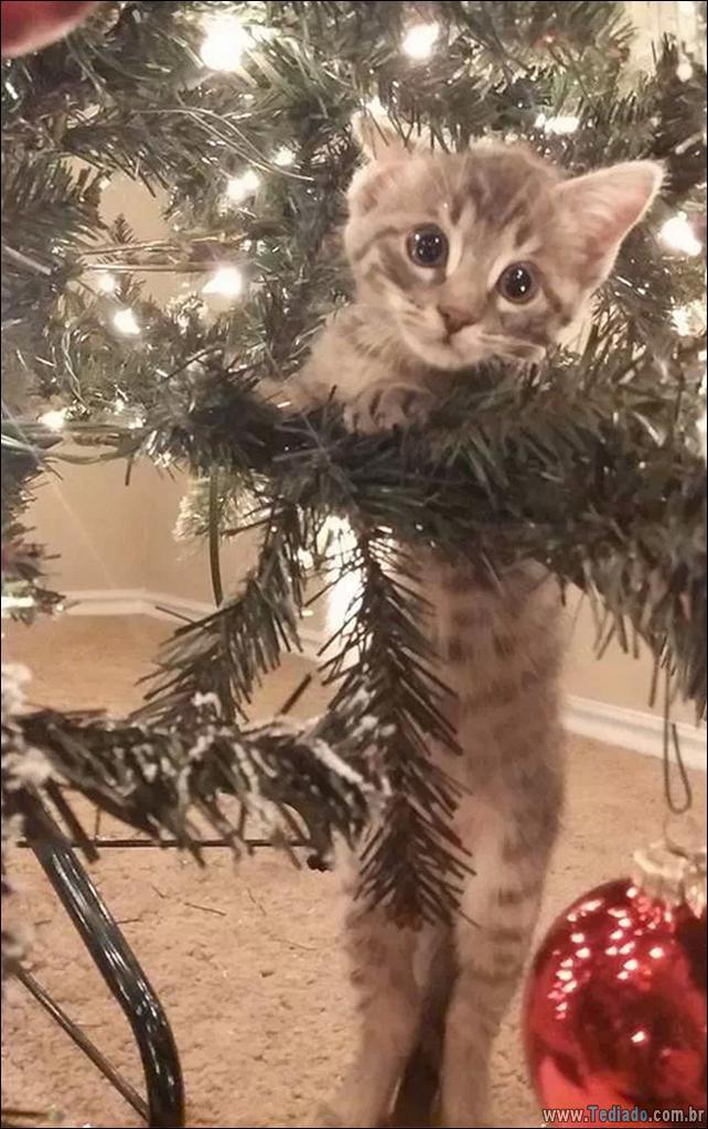 gatos-ajudando-a-decorar-arvore-de-natal-13