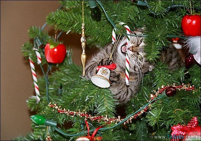 gatos-ajudando-a-decorar-arvore-de-natal-14