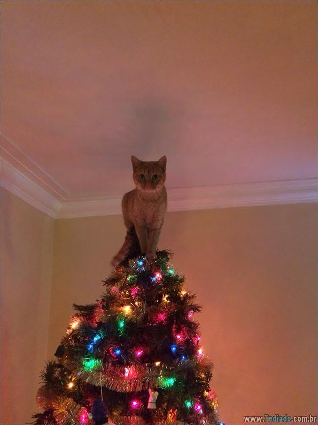 gatos-ajudando-a-decorar-arvore-de-natal-15