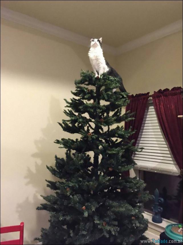gatos-ajudando-a-decorar-arvore-de-natal-16