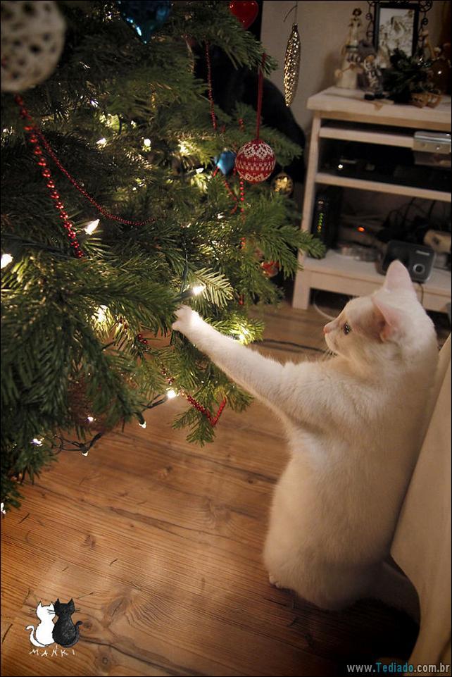 gatos-ajudando-a-decorar-arvore-de-natal-17
