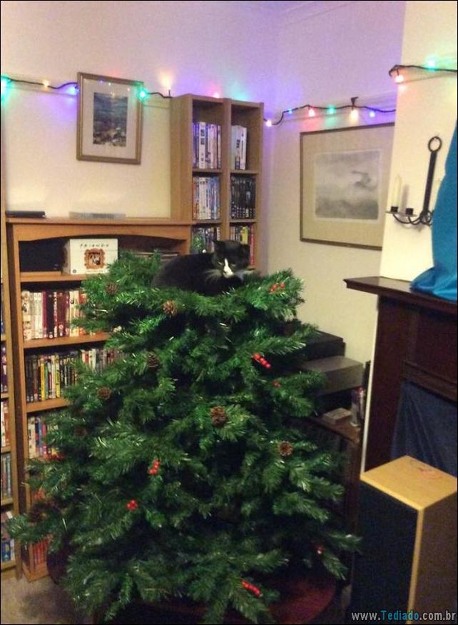 gatos-ajudando-a-decorar-arvore-de-natal-18