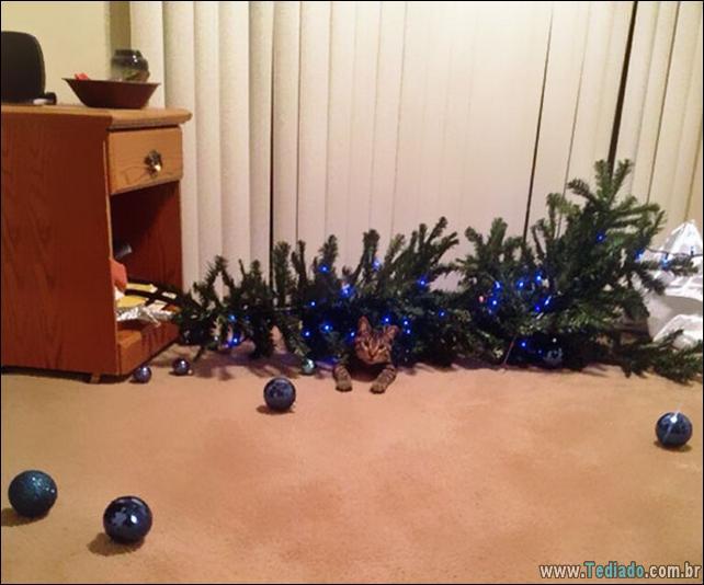 gatos-ajudando-a-decorar-arvore-de-natal-19