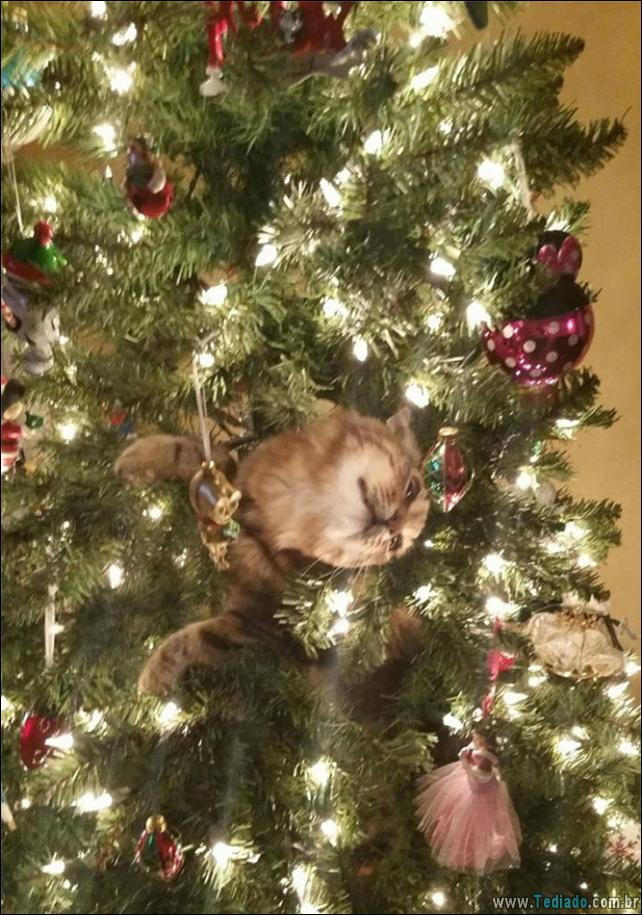gatos-ajudando-a-decorar-arvore-de-natal-20