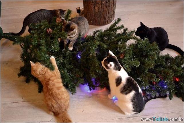 gatos-ajudando-a-decorar-arvore-de-natal-21