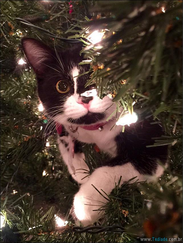 gatos-ajudando-a-decorar-arvore-de-natal-22