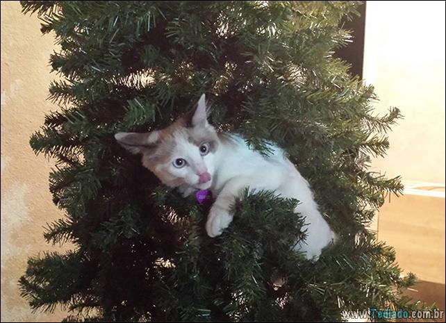 gatos-ajudando-a-decorar-arvore-de-natal-23