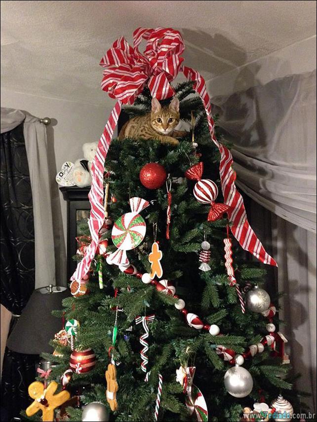gatos-ajudando-a-decorar-arvore-de-natal-24