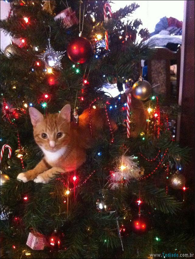 gatos-ajudando-a-decorar-arvore-de-natal-25