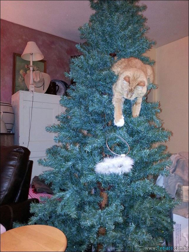 gatos-ajudando-a-decorar-arvore-de-natal-26