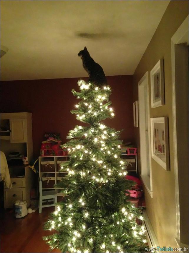 gatos-ajudando-a-decorar-arvore-de-natal-27