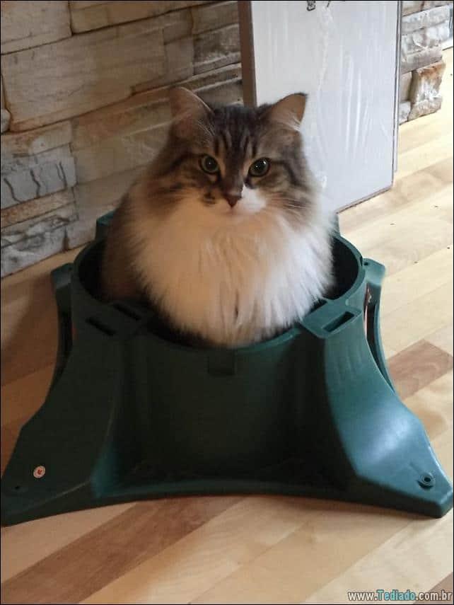 gatos-ajudando-a-decorar-arvore-de-natal-29