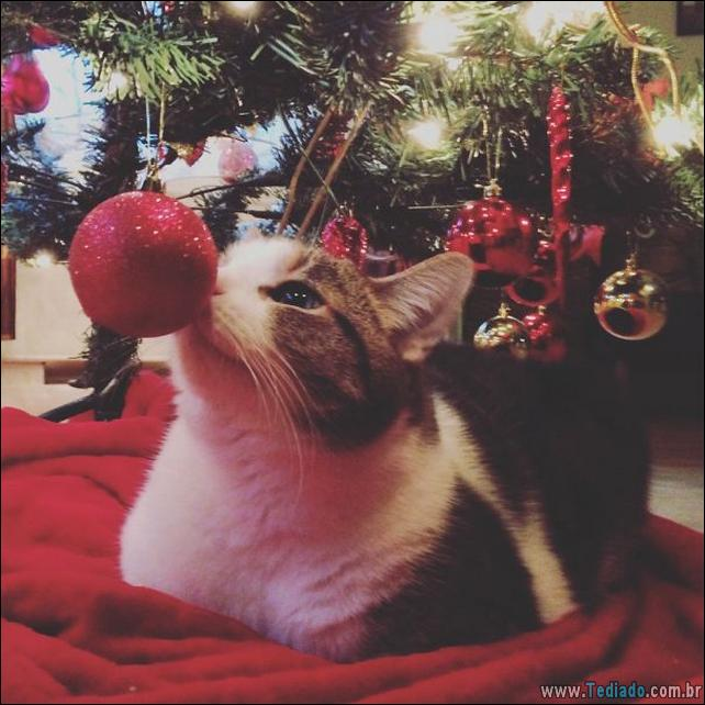 gatos-ajudando-a-decorar-arvore-de-natal-30