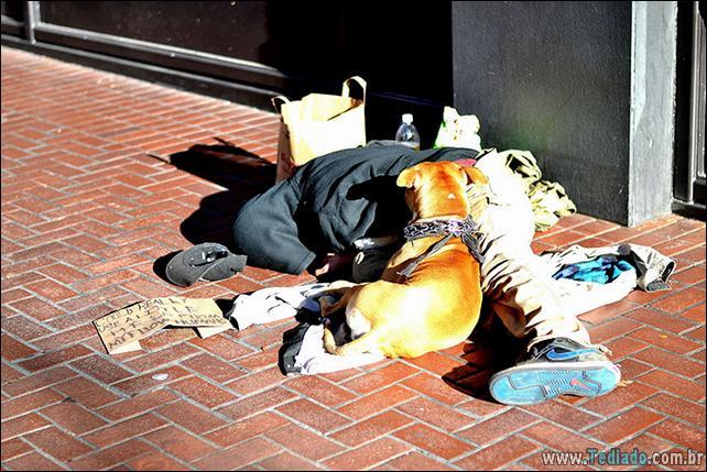 morador-de-rua-e-seus-cachorros-12