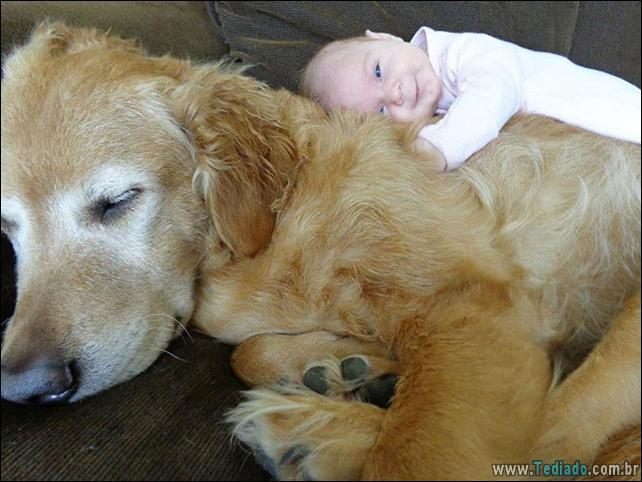 motivos-filhos-precisam-animal-estimacao-11
