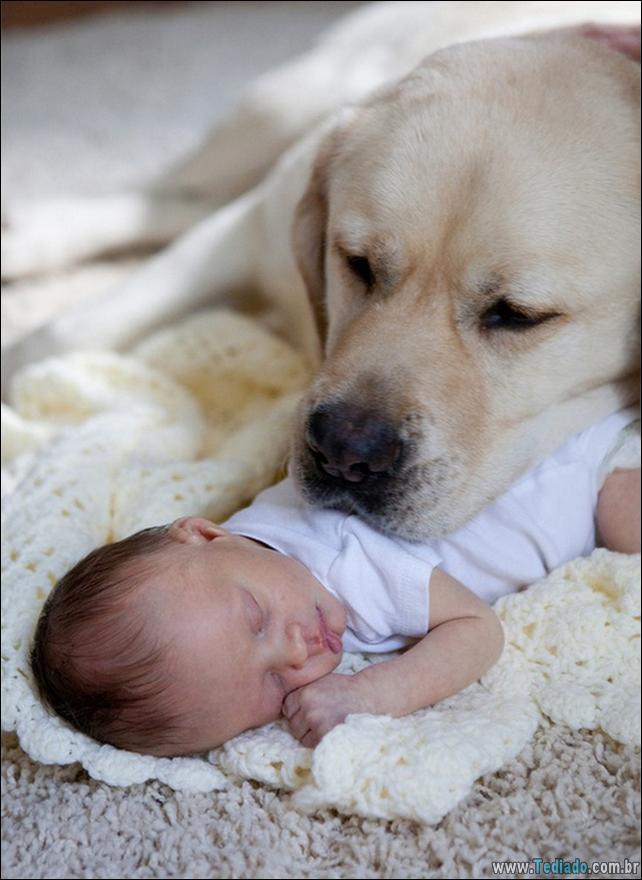 motivos-filhos-precisam-animal-estimacao-37