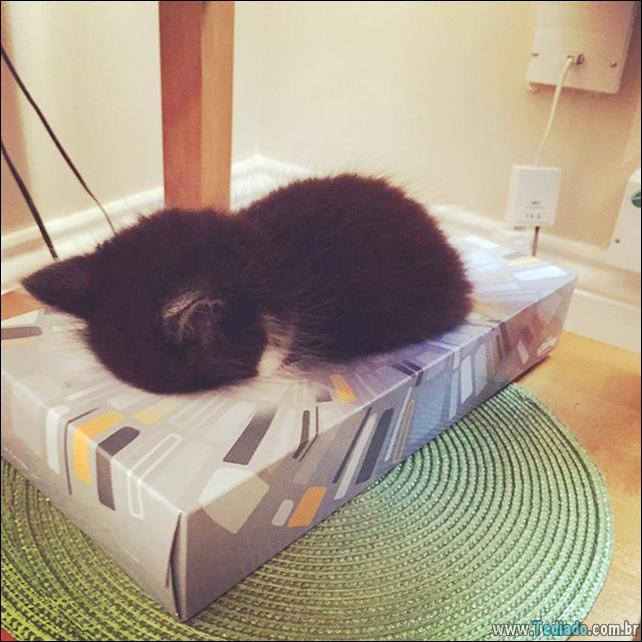 animais-que-dormi-em-qualquer-lugar-09