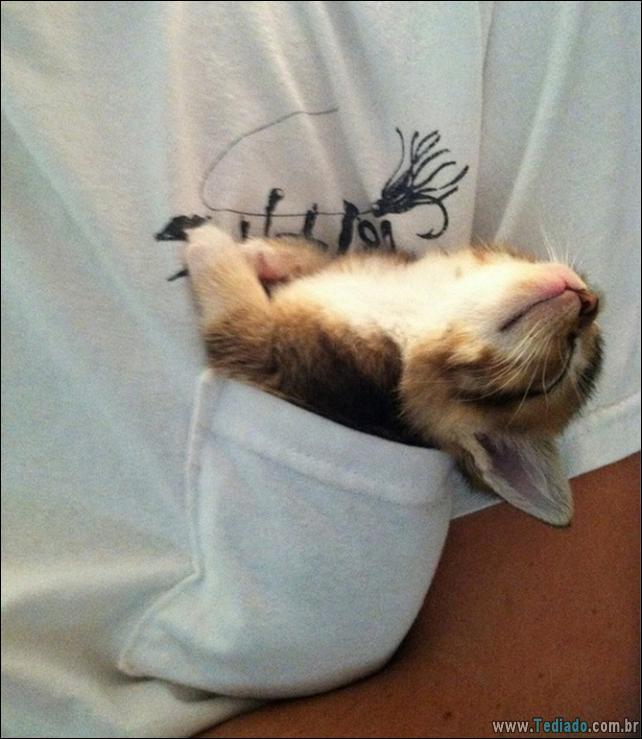 animais-que-dormi-em-qualquer-lugar-10