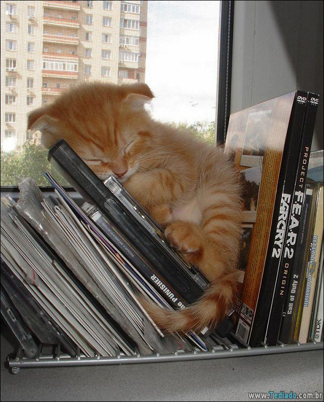animais-que-dormi-em-qualquer-lugar-11