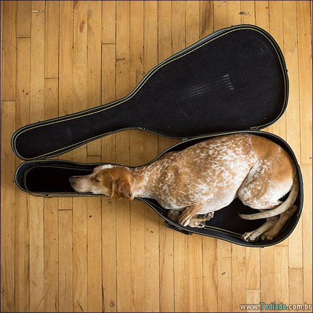 animais-que-dormi-em-qualquer-lugar-17