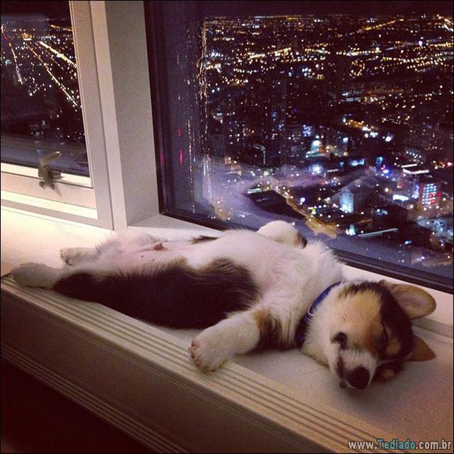 animais-que-dormi-em-qualquer-lugar-18