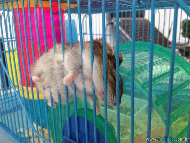 animais-que-dormi-em-qualquer-lugar-28