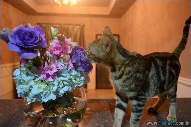animais-que-gostam-de-flores-01