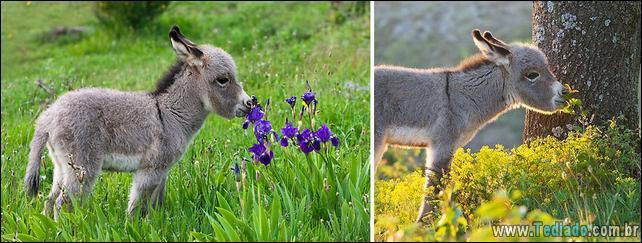 animais-que-gostam-de-flores-02