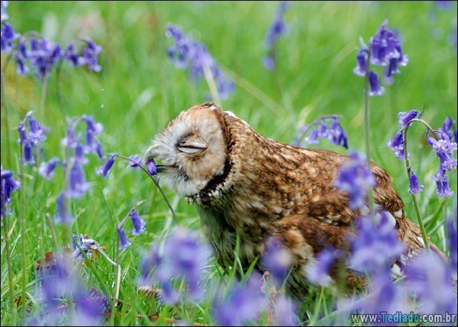 animais-que-gostam-de-flores-04