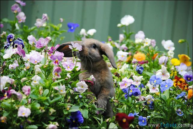 animais-que-gostam-de-flores-05