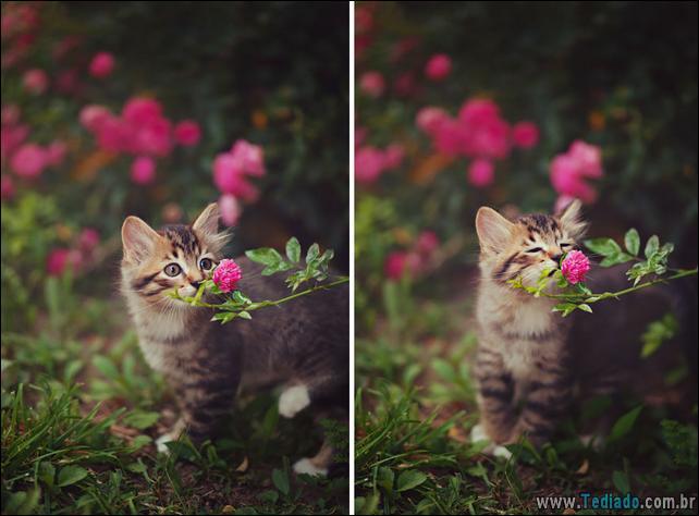 animais-que-gostam-de-flores-06