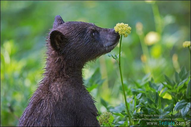 animais-que-gostam-de-flores-07