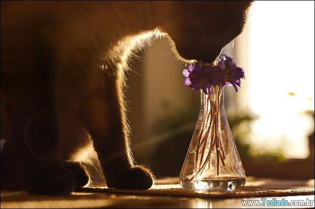 animais-que-gostam-de-flores-08