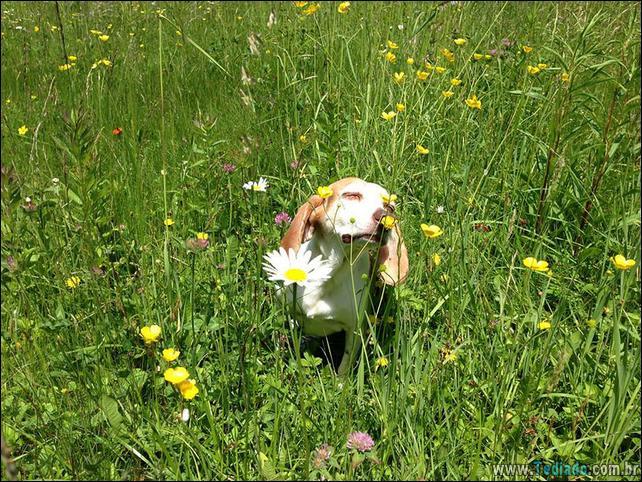 animais-que-gostam-de-flores-09