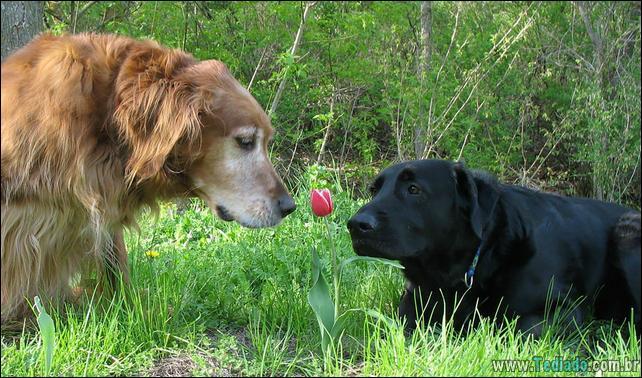 animais-que-gostam-de-flores-11