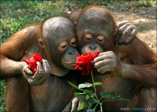 animais-que-gostam-de-flores-12
