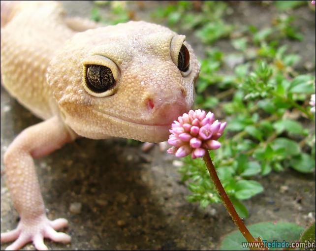 animais-que-gostam-de-flores-13