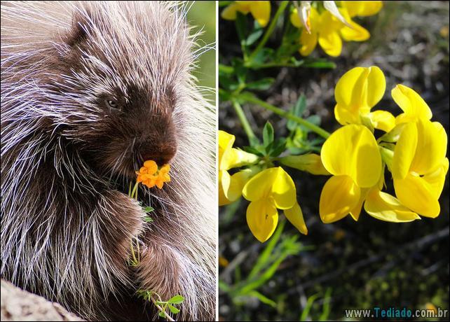 animais-que-gostam-de-flores-14