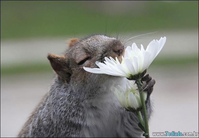 animais-que-gostam-de-flores-15