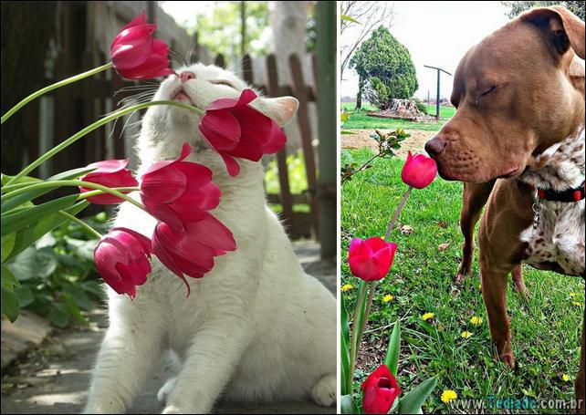 animais-que-gostam-de-flores-16