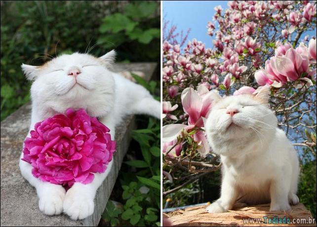 animais-que-gostam-de-flores-19