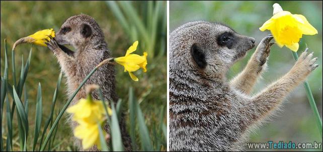 animais-que-gostam-de-flores-20