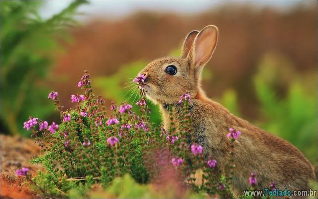 animais-que-gostam-de-flores-21