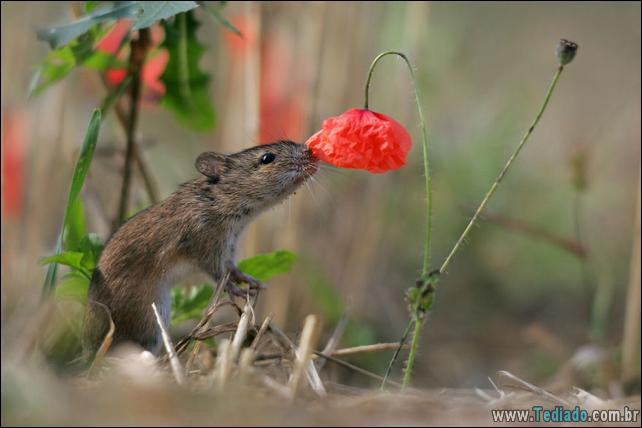 animais-que-gostam-de-flores-23