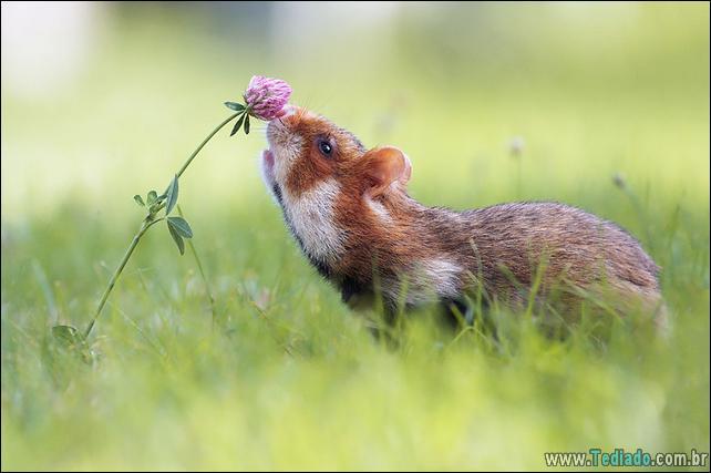 animais-que-gostam-de-flores-24