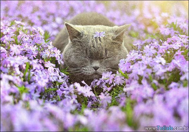 animais-que-gostam-de-flores-26