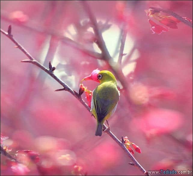 animais-que-gostam-de-flores-27